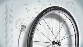 Continental Tire made of Dandelion Rubber wins German Sustainability Award